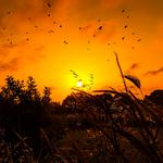 Grass, birds, sunrise, sun
