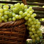 Pears, grapes, bunches, basket, white