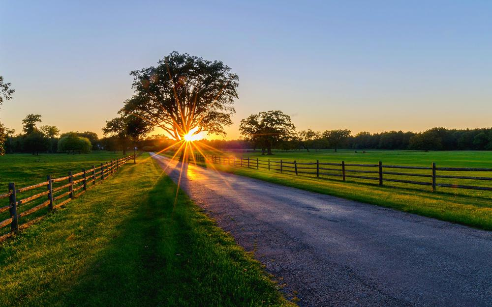 Nature, trees, park, trees, sunset, sunrise, path, spring, road, forest, sunset, spring, walk, sunrise, nature, park, road, forest, rays, rays