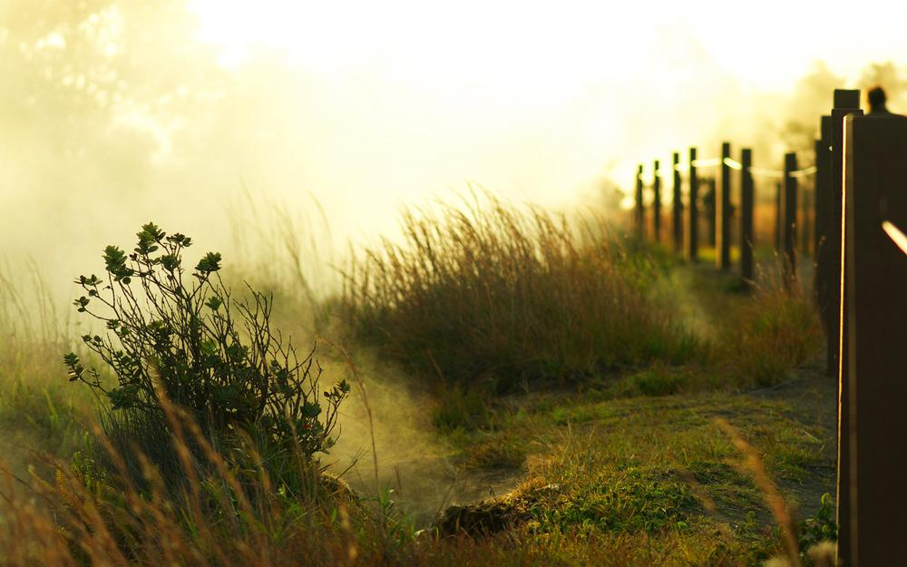 Greens, light, morning, dawn, trees, fence, fence, place, bushes, sun, fog, grass
