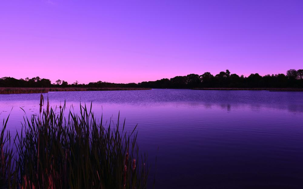 Lake, reed, dawn, lilac, forest, morning