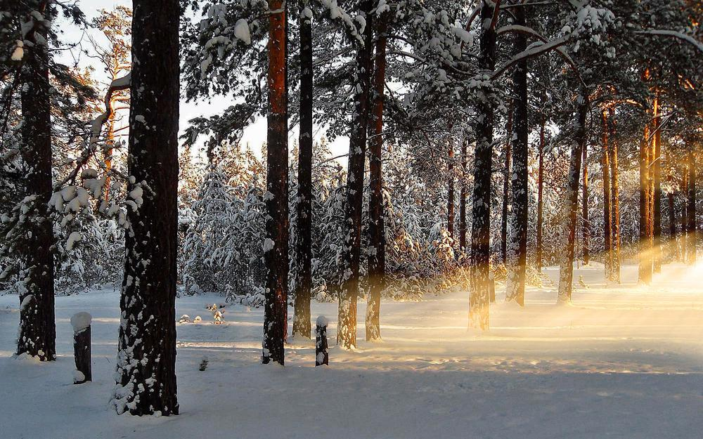 Dawn, morning, forest, rays, winter, snow, nature