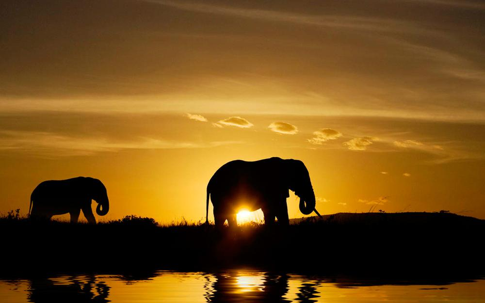 Sunset, coast, nature, shadow, evening, elephants, animals