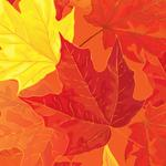 Graphics texture leaves
