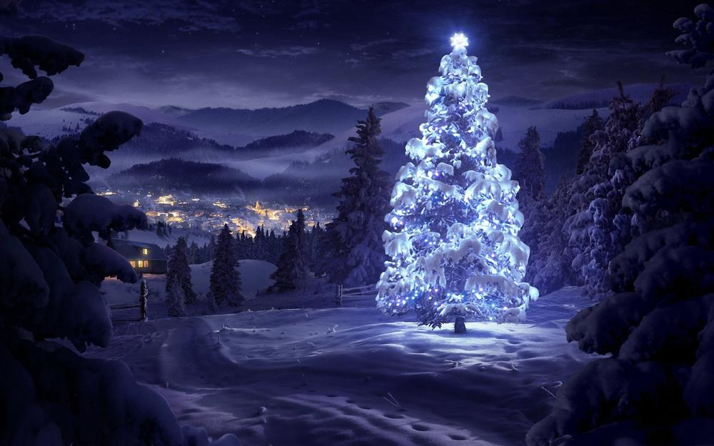 Christmas tree, christmas, in the forest
