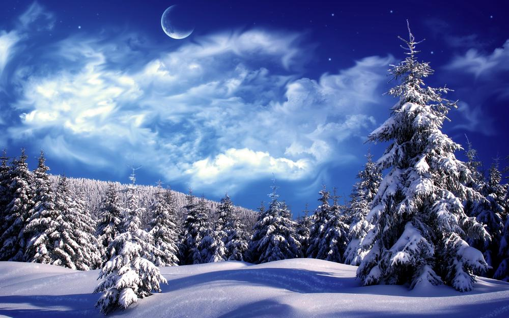 Winter forest, christmas trees, snow