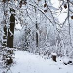 Winter, path, in the snow