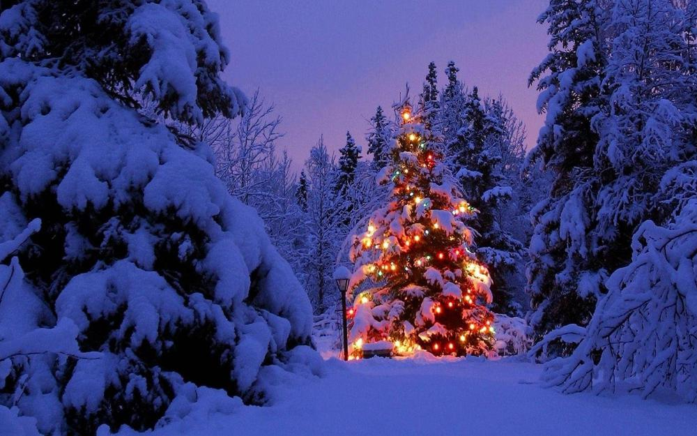 Christmas tree, forest, drifts