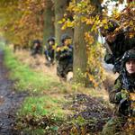 Soldiers, forest, trees