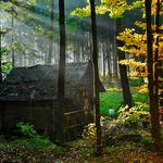 House, in the forest, old