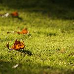Leaves, forest, grass, nature, park, macro