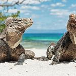 Lizards on the sand wallpaper