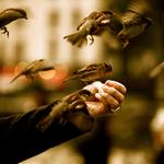 Sparrow on hand wallpaper