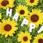 Chamomile, grass, happy, flowers