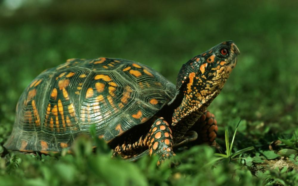 Green turtle on the grass