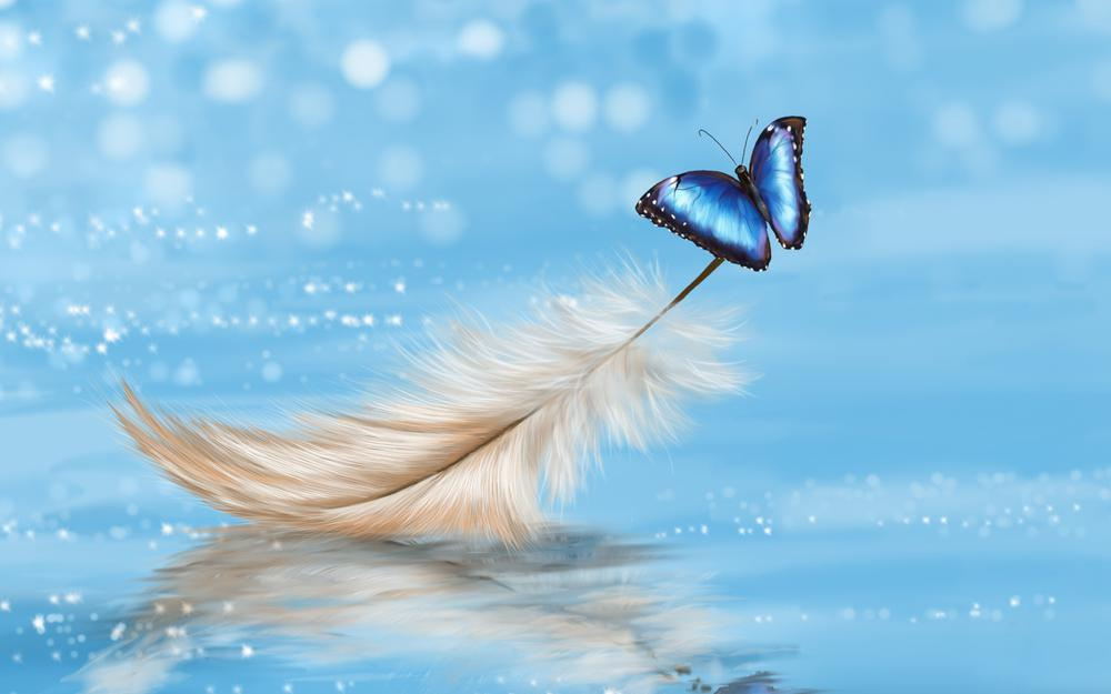 Feather, butterfly, blue