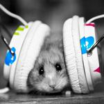 Hamster and music