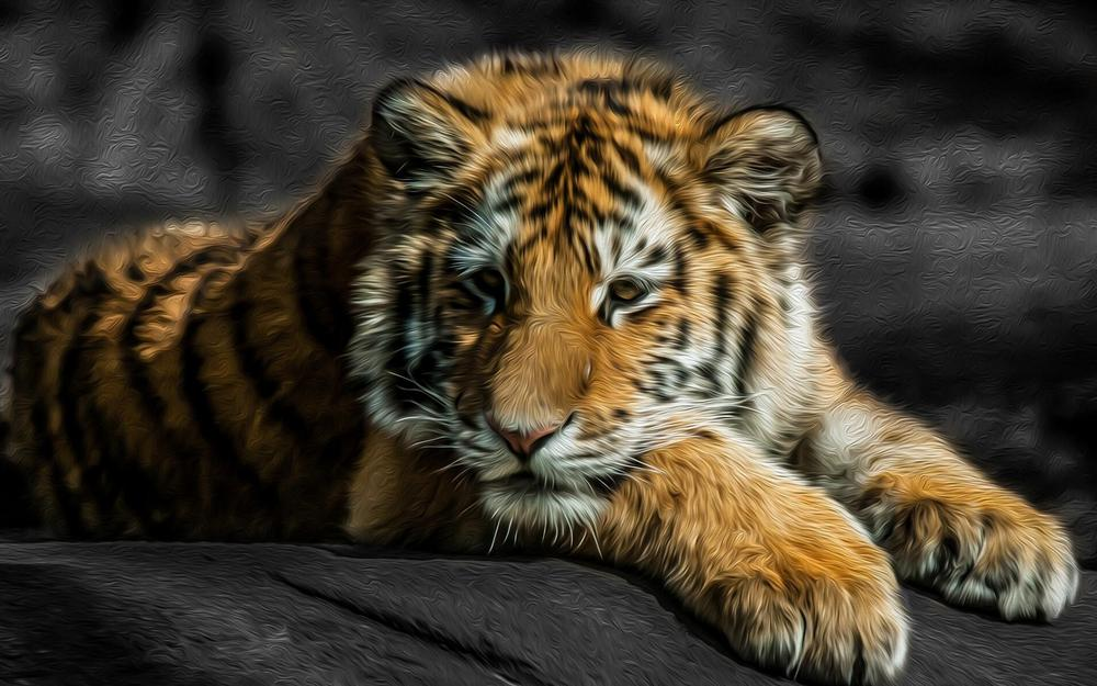 Tiger, look, thought