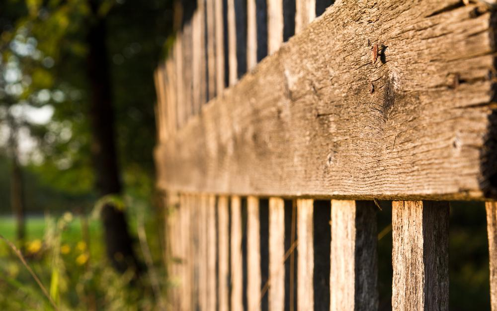 Tree, wooden fence, nail, hat