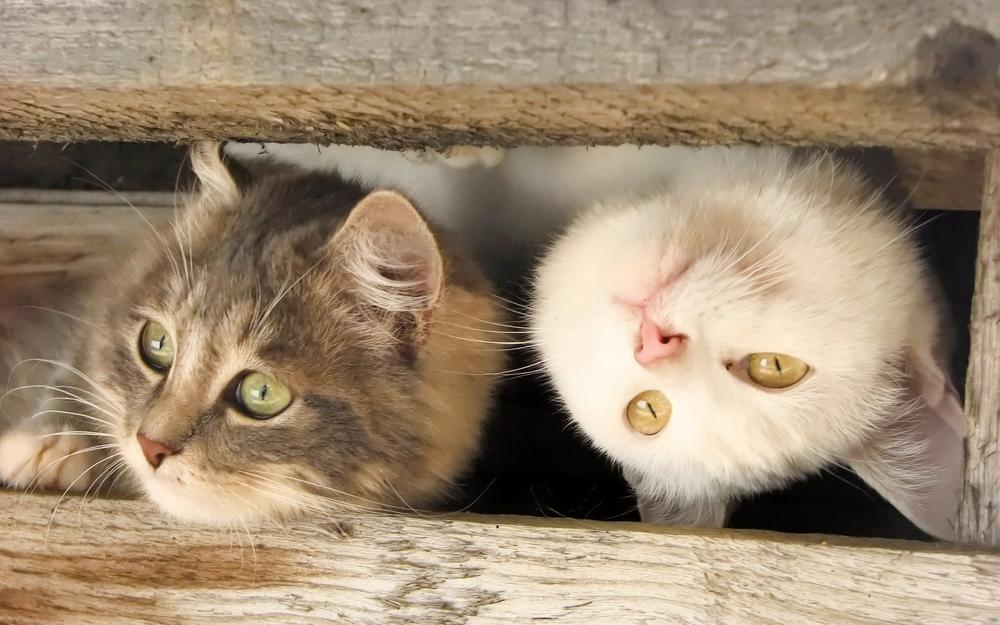 Two kittens, view, cats