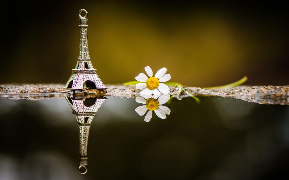 Photo, toys, water, eiffel tower beautiful pictures, flowers, petals, beautiful wallpapers