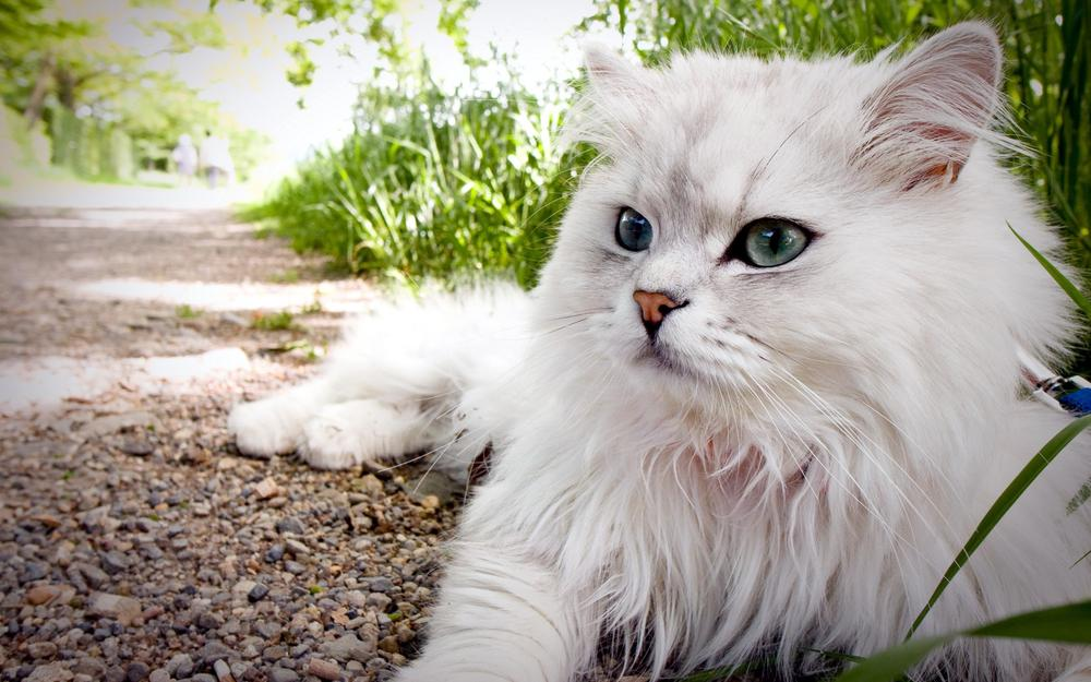 White cat on earth