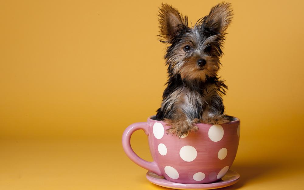 Cup, puppy, pink