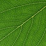 Green leaves background 04