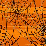Web, spider, pattern, mesh, insect