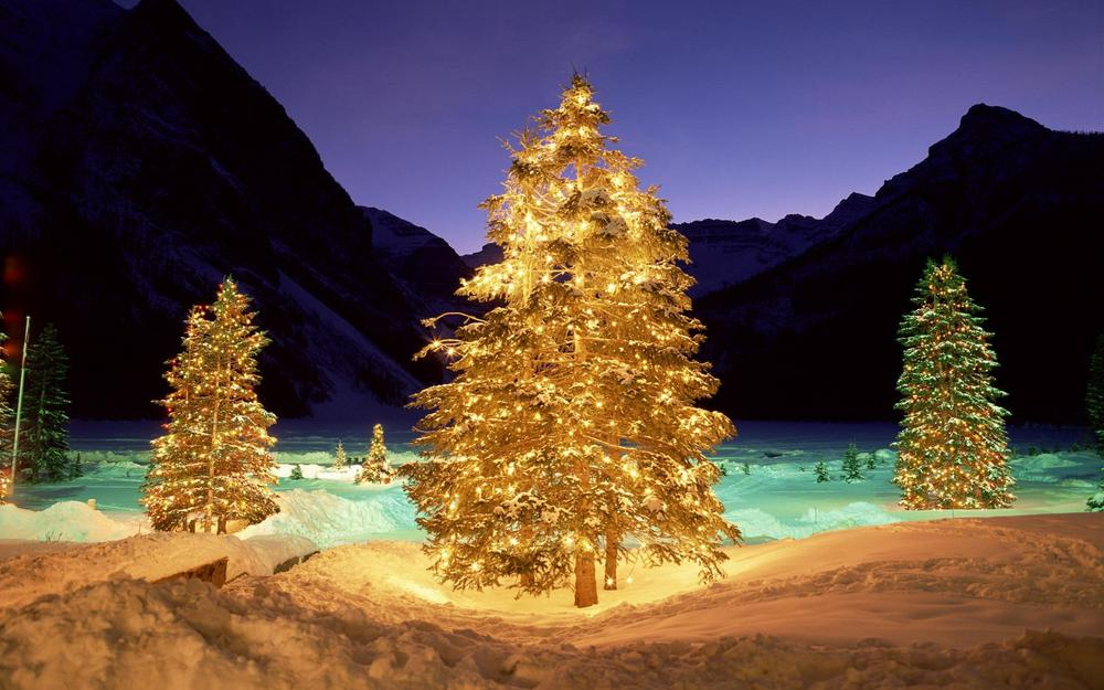 Snow, trees, new year, christmas
