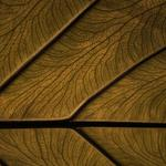 Pattern, structure, wood