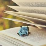 text, pages, book, blue, rose