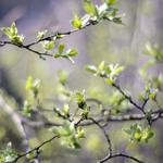 Spring, greens, blur, leaves, trees, branches, nature
