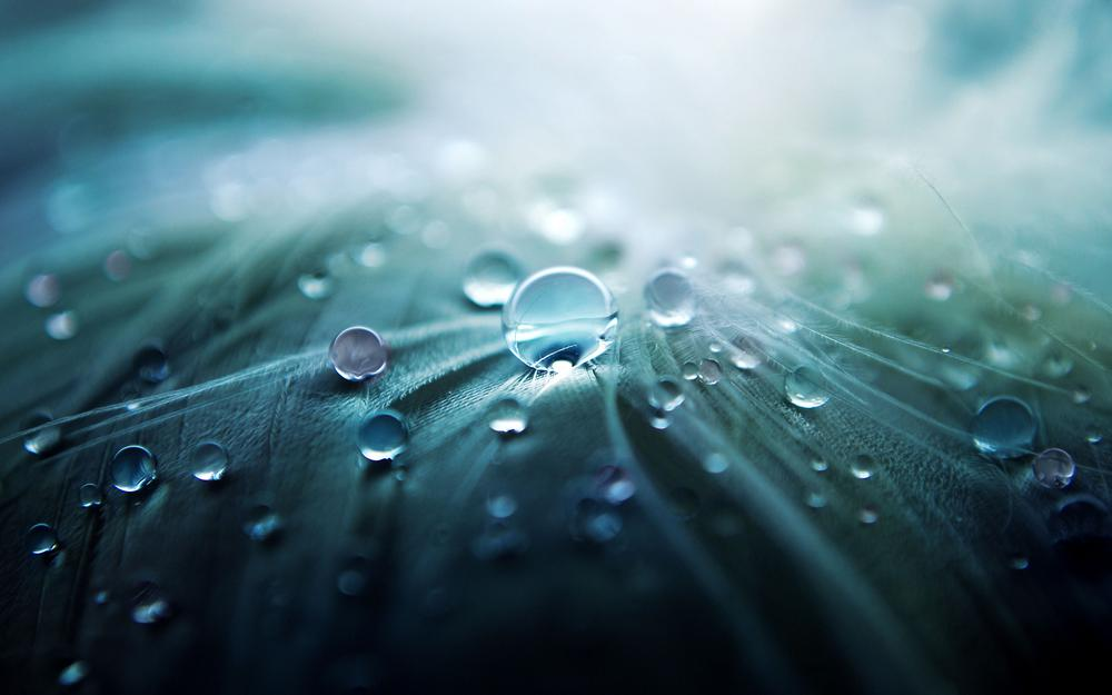 Feather, drops, dew