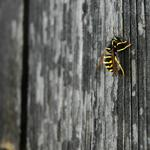 Bee, crawling, paws
