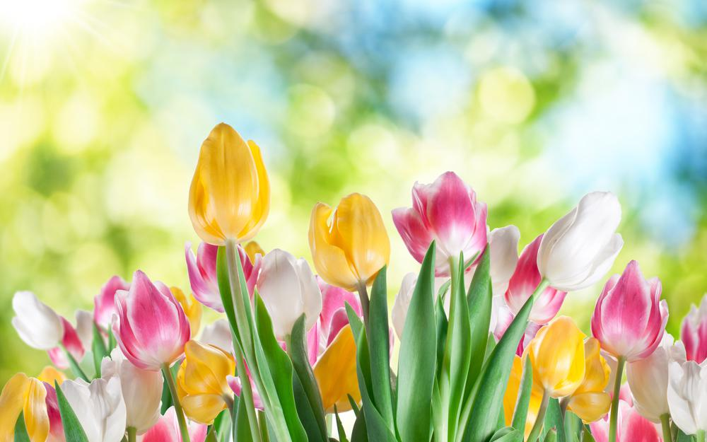 Tulips of paint