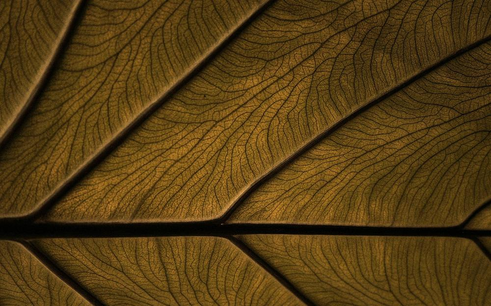 Tree, structure, pattern