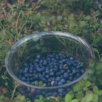 Berries, blueberry, plate