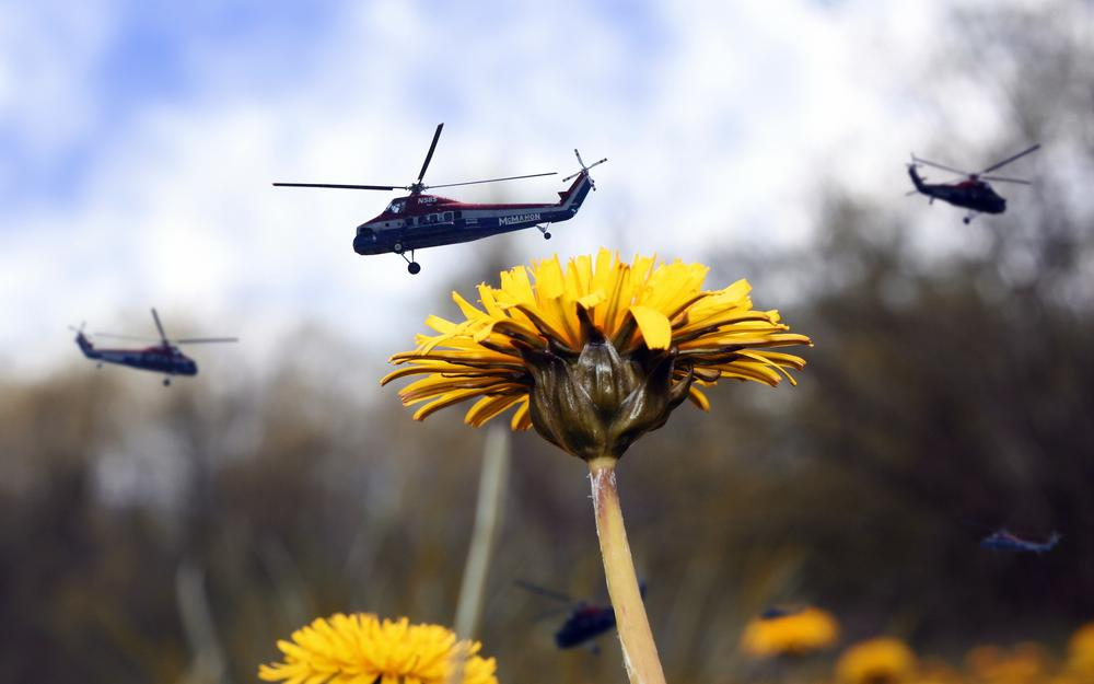 Situation, helicopters, dandelion