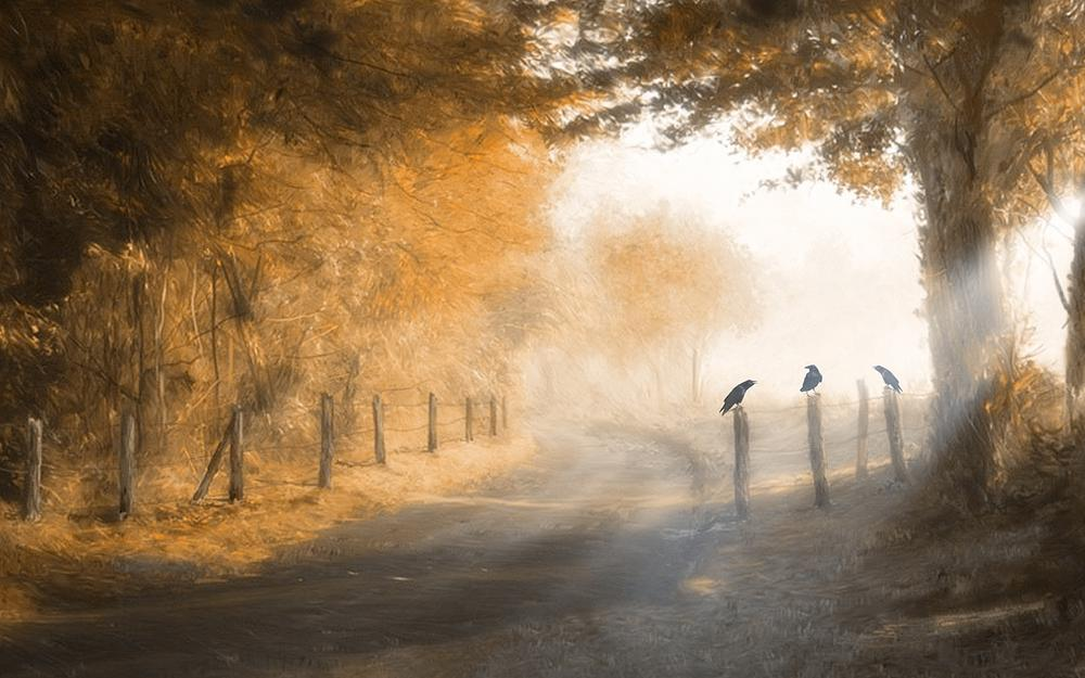 Forest, sun, crow, fence, three, road, day