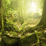 Mysterious, forest, trees, sun, tropical, mystic wood
