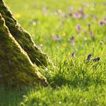 Flowers, trees, stem, grass, roots