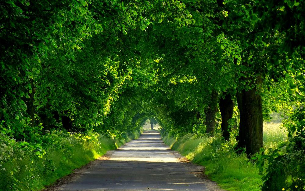 Forest, park, forest, trees, spring, spring, trees, park, path, nature, nature, walk, road, road