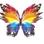Butterfly, colors, wings, abstraction