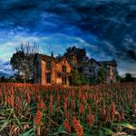 Countries architecture field flowers nature sky clouds