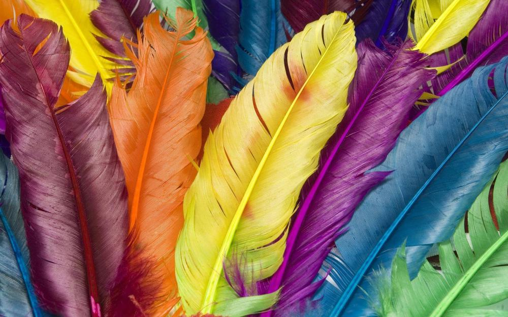 Multicolored feathers wallpaper