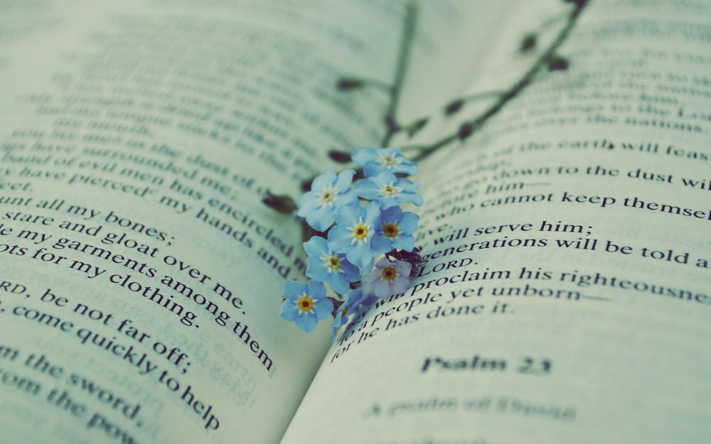 Book, text, forget, flowers