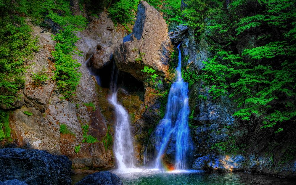 Forest, trees, rock, stream, waterfall, stones