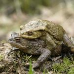 Couple, love, toad