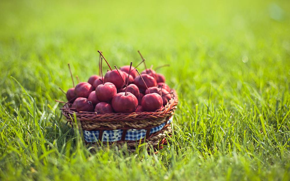 Cherries on the grass in a basket